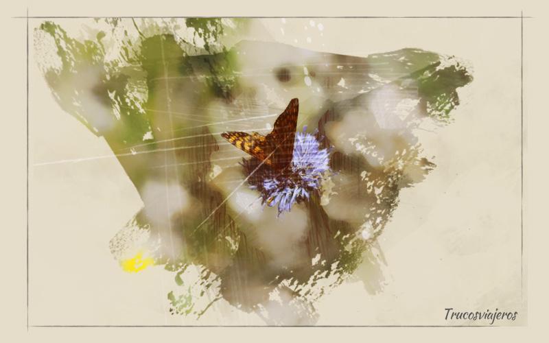 mariposas galicia